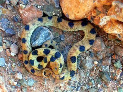 Granjeros de serpientes