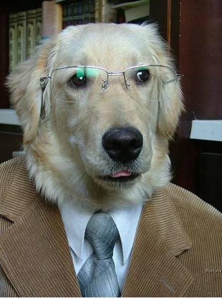 perros en traje, perros para entrevista de trabajo, perros buscando trabajo, empleo, selección laboral, trabajo,, fotos de perros buscando trabajo.