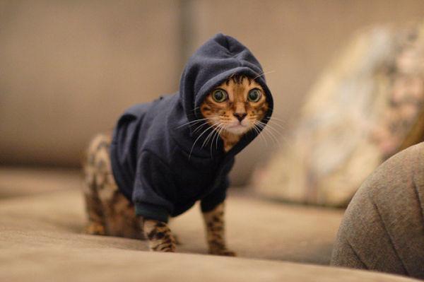 gatos, gatos tiernos, gatitos vestidos, como vestir para una entrevista, como me visto para una entrevista, entrevista de trabajo, tips para entrevista de trabajo