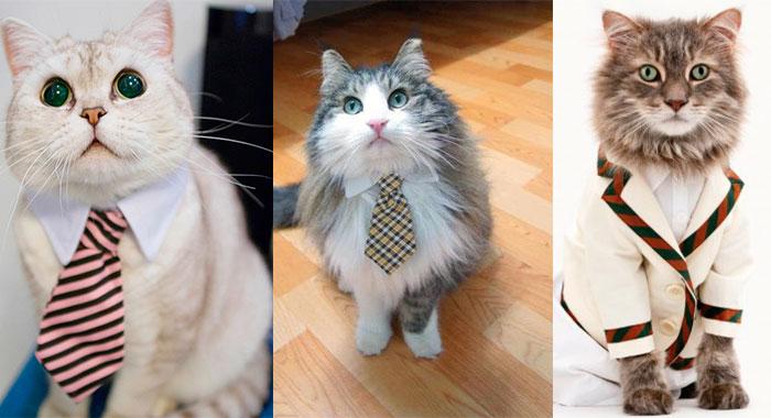 gatos, gatos tiernos, gatitos vestidos, como vestir para una entrevista, como me visto para una entrevista, entrevista de trabajo, tips para entrevista de trabajo, lucir bien para una entrevista