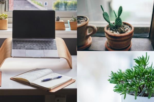 Tener o no tener plantas en la oficina