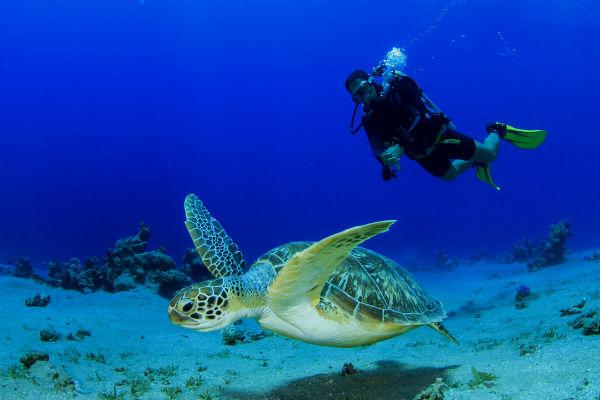 Cuidador de islas exóticas